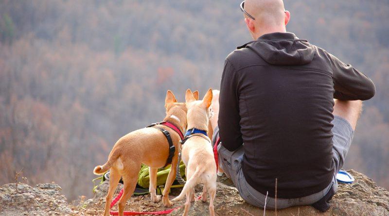 Des conseils pour voyager avec son animal de compagnie en Italie